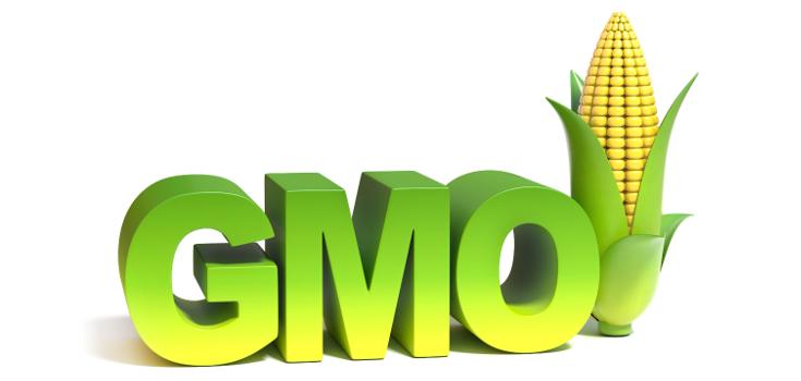 gmo-word-white-735-350