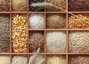 بیثباتی نرخ ارز بر نوسان قیمت خوراک دام
