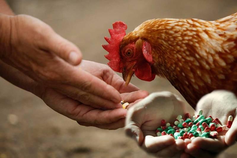 مصرف آنتی بیوتیک در مرغداری ها