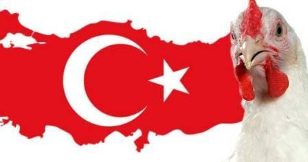 وضعیت تولید و صادرات ترکیه در بخش طیور