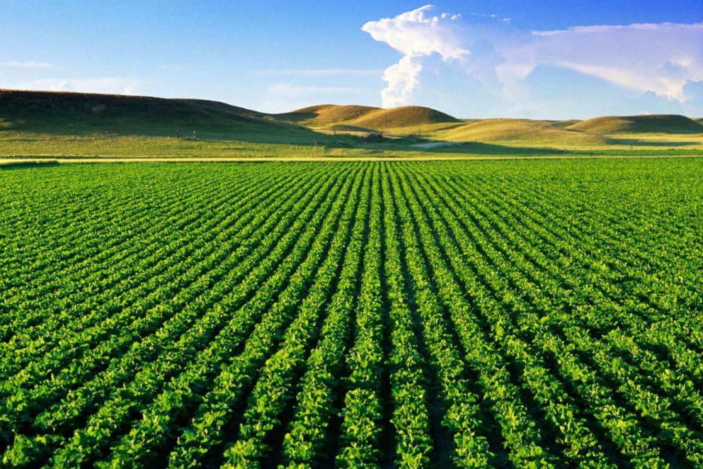مزرعه کشاورزی
