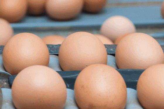 تولید اولین تخم مرغ کربن خنثی جهان
