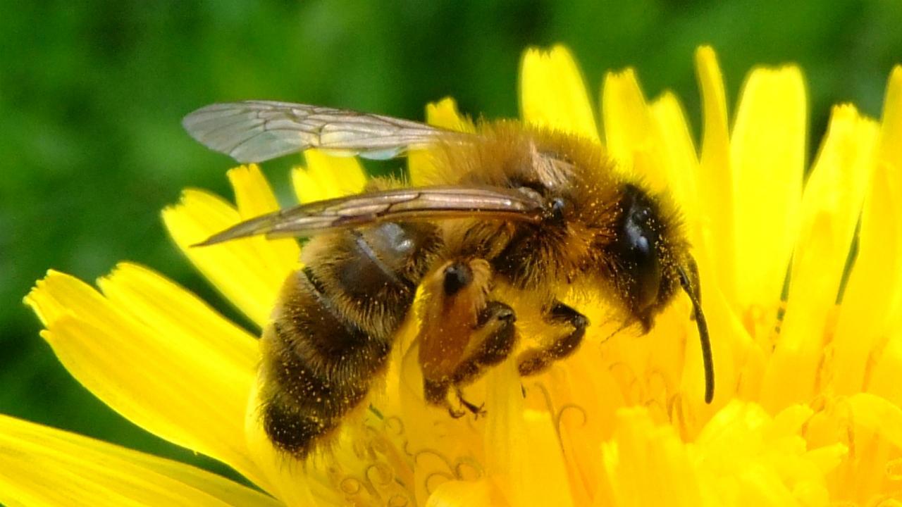 زنبورداری و زنبوردرمانی