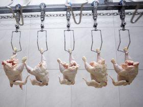صادرات مرغ بوسنی و هرزگوین