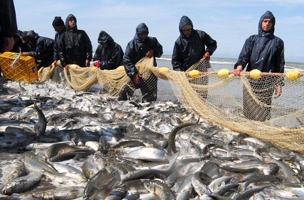 ماهیان دریای خزر