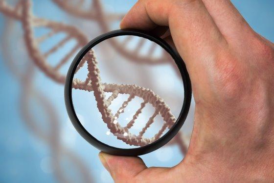 نمایش ژنوم ذرت توسط محققان آمریکایی