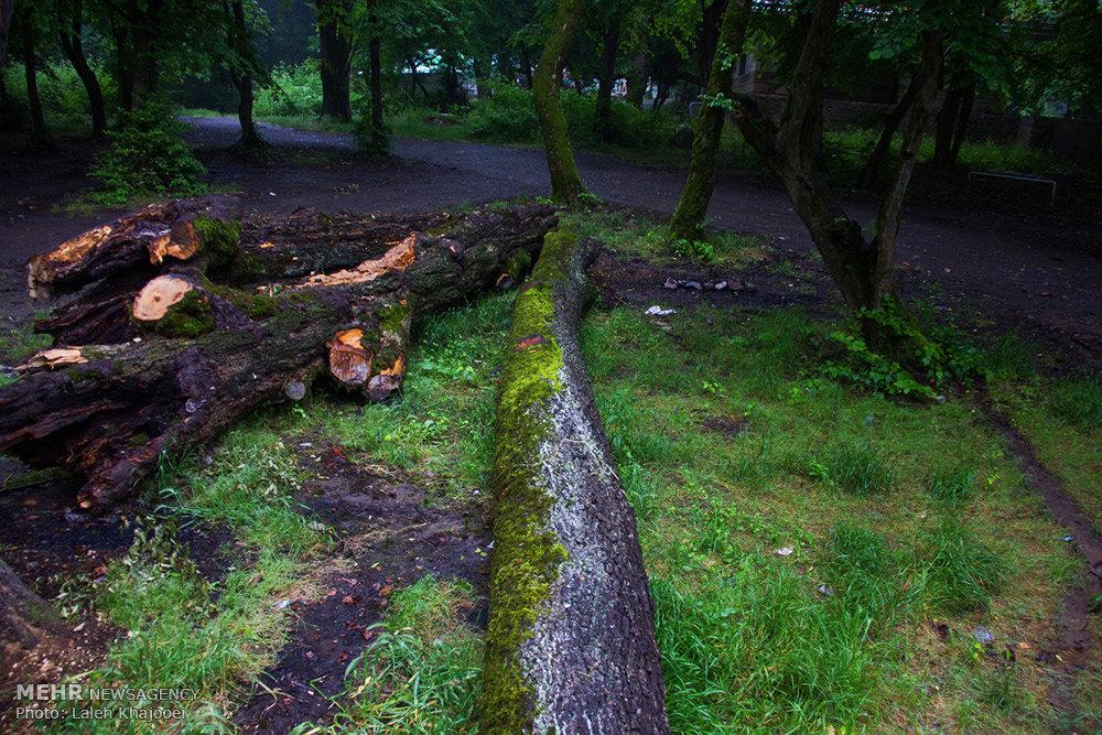 بهره برداری غیرمجاز از جنگل ها
