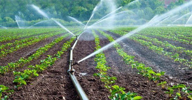 تجهیز ۲.۱ میلیون هکتار از اراضی کشاورزی به سامانه های نوین آبیاری/انتقال گیاهان آب بر به گلخانه ها