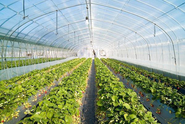بازسازی ۴۱۹ هکتار گلخانه در کشور