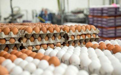 واردات تخممرغ