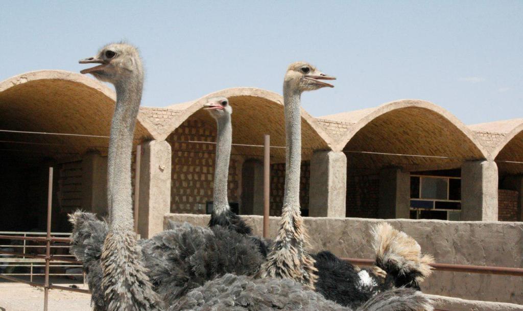 گوشت شترمرغ ایران