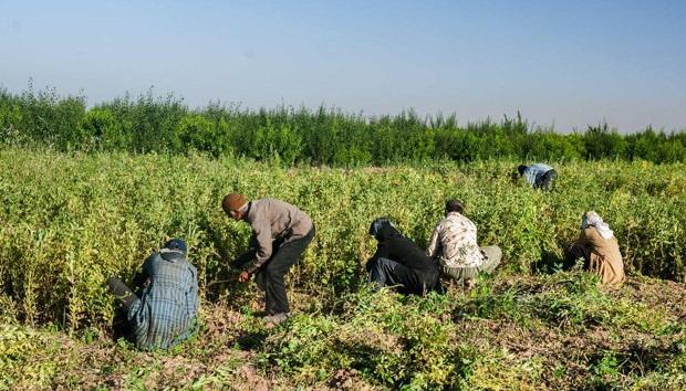 ضرورت تمهیدات ویژه در کشاورزی و دامپروری