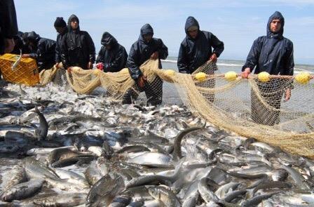 صید ۷۰۰ هزار تن انواع آبزیان از دریا