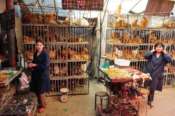 پادتن آنفلوانزای پرندگان