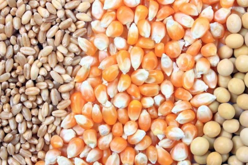صادرات 18 قلم کالای اساسی و ضروری کشاورزی