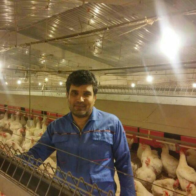 مهدی فریدونیان دبیر انجمن مرغ مادر گوشتی ایران