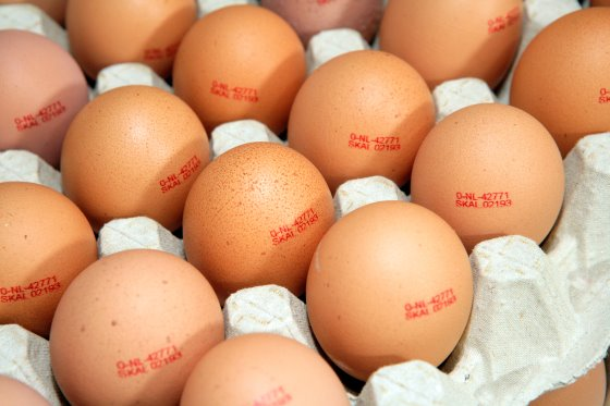 نقش تخم مرغ در جهان