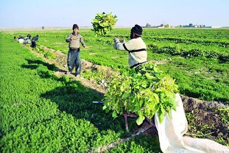 ارائه سند زمین های کشاورزی