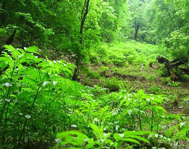 سازمان جنگل ها