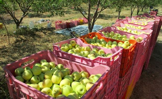 آغاز به کار زنجیره سیب ایرانیان به عنوان اولین زنجیره ملی