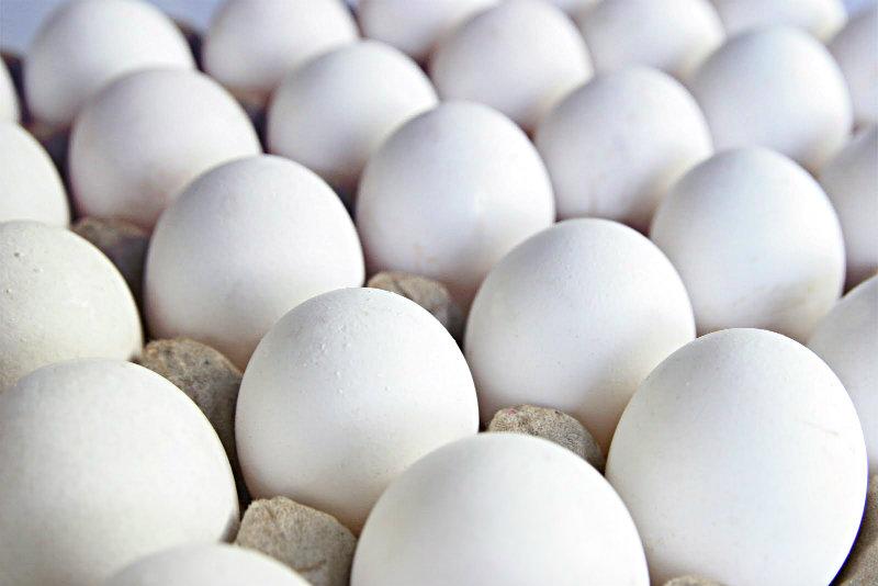 تولید تخم مرغ