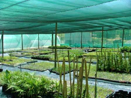 باغات کشور