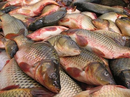 ماهی و نهاده های مرتبط
