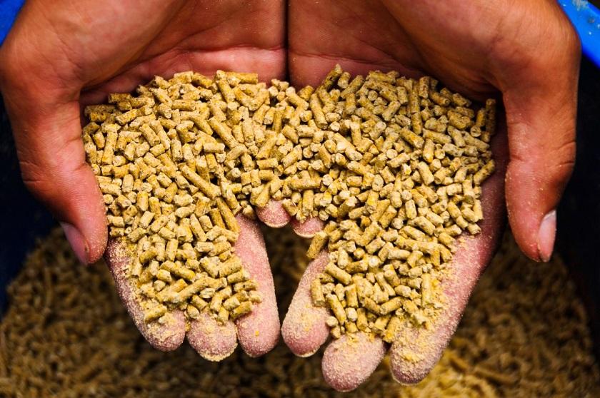 تاثیر برگزیت بدون توافق بر صنعت خوراک دام و طیور بریتانیا