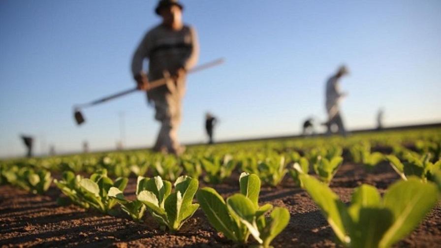 نهادههای کشاورزی