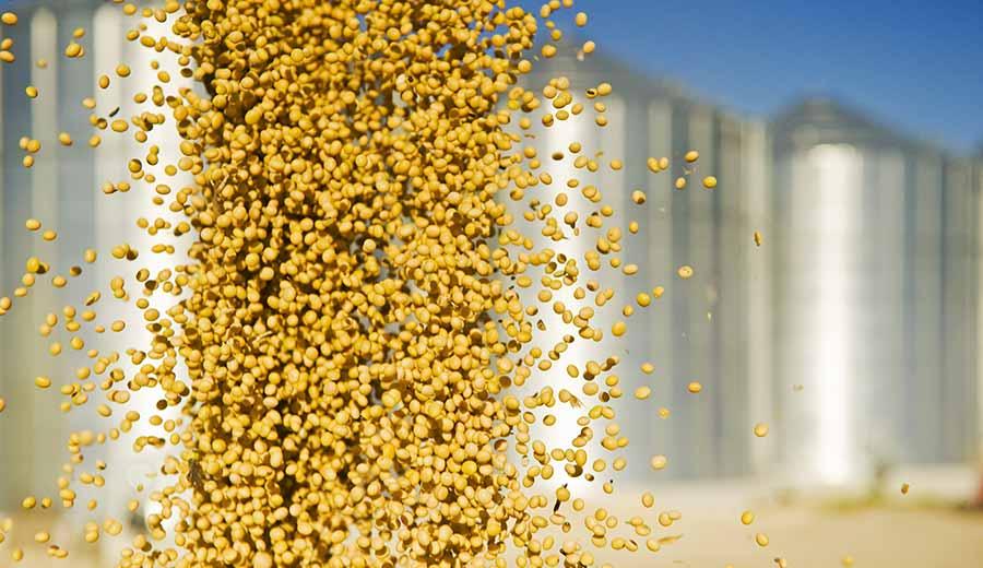 تولید جهانی خوراک