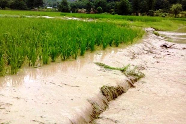 خسارت ۴۵ هزار میلیارد ریالی سیل به بخش کشاورزی ۱۲ استان کشور