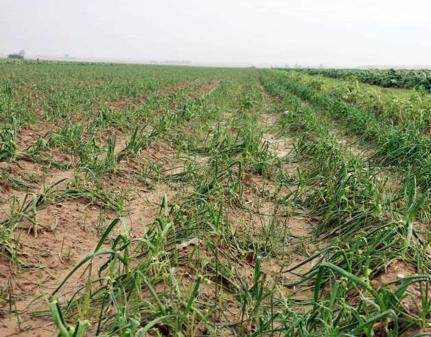 کشاورزی خوزستان