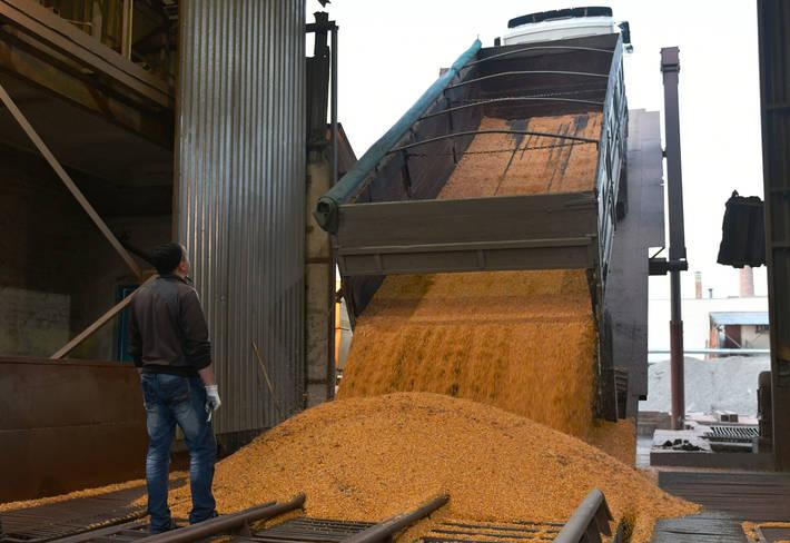 مصرف جهانی گندم
