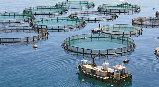 آمادگی نروژ برای توسعه پرورش ماهی در قفس در ایران