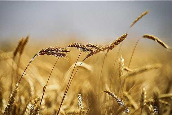صادرکننده گندم جهان