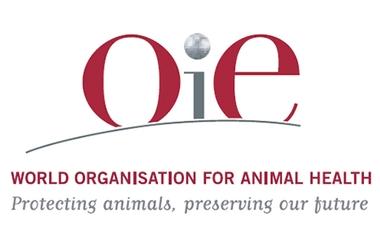 نشست بینالمللی OIE با حضور ۳۰۰ کارشناسان ارشد دامپزشکی آغاز به کار کرد