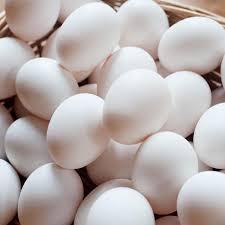 تخم مرغ، هلند، حشره، تغذیه شده