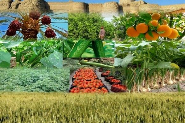 ۳ اولویت تعاونیهای تولید روستایی