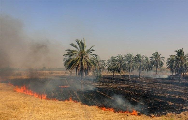 مزارع گندم و جو عراق در آتش سوخت