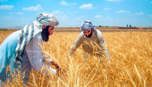 نگرانی کشاورزان افغانستانی