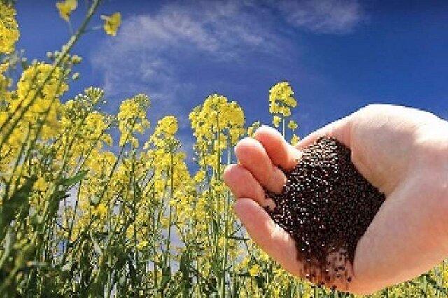 واردات دانه روغنی به ایران